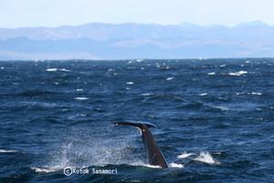 2013_kushiro_orcas_tale_ks